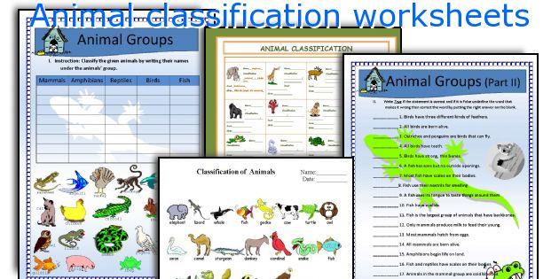 Animal classification worksheet kindergarten