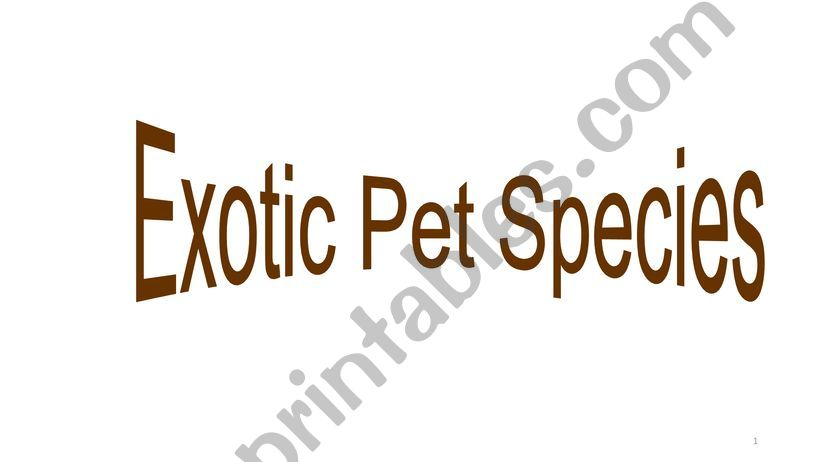 Exotic animals powerpoint