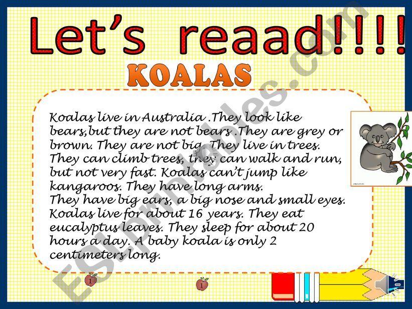 Koalas powerpoint