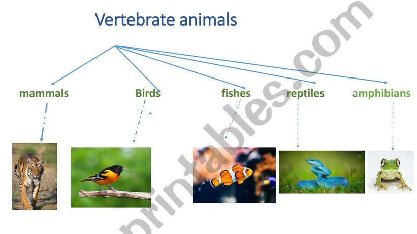 classification of vertebrate animals