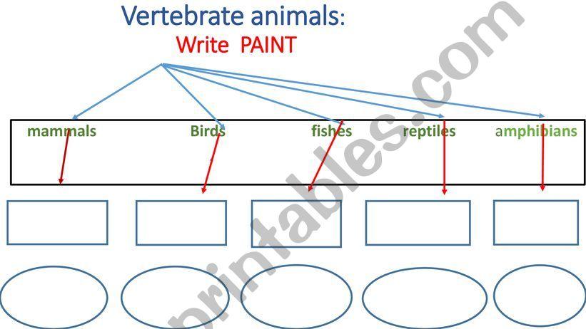 vertebrate animals examples  powerpoint
