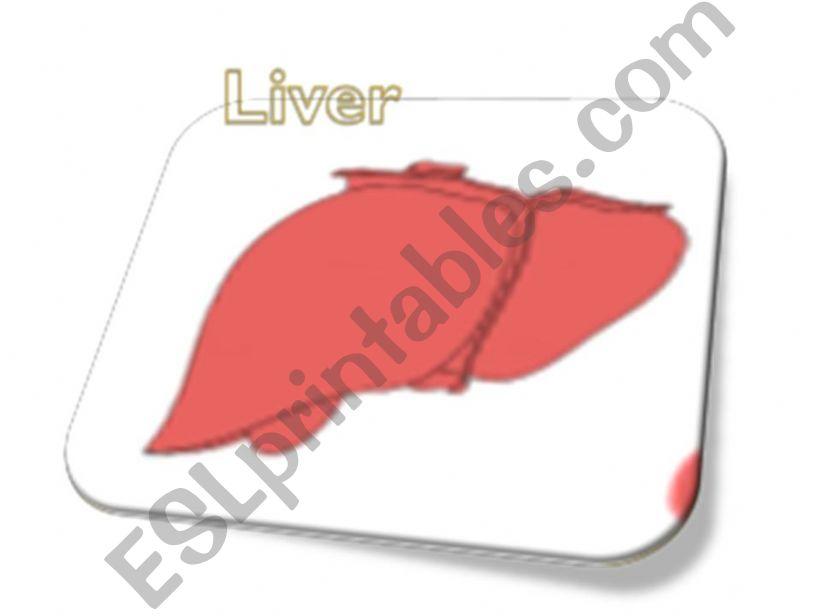 Internal Body Organs 1st part powerpoint