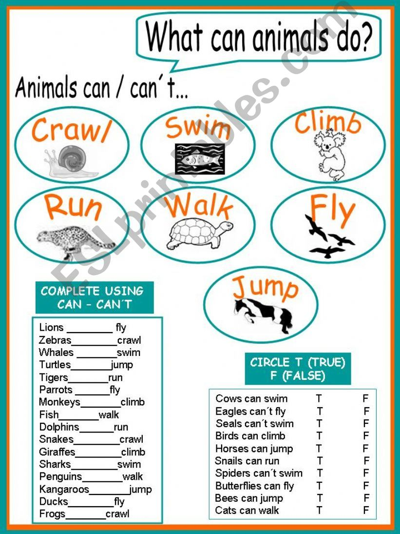 What can/can´t animals do? 2 pages