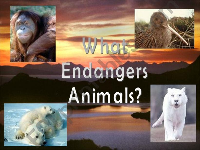 What endangers animals? powerpoint