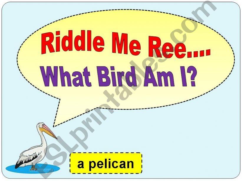 Bird Riddles powerpoint