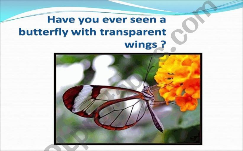 Transparent Butterfly powerpoint