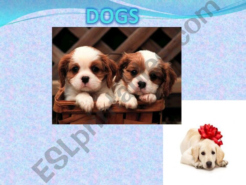 Dogs powerpoint