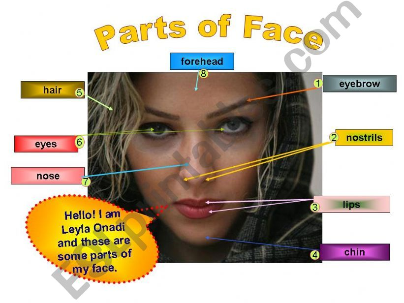 Parts of Face powerpoint