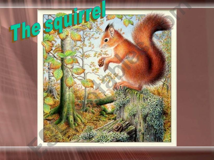 THE SQUIRREL powerpoint