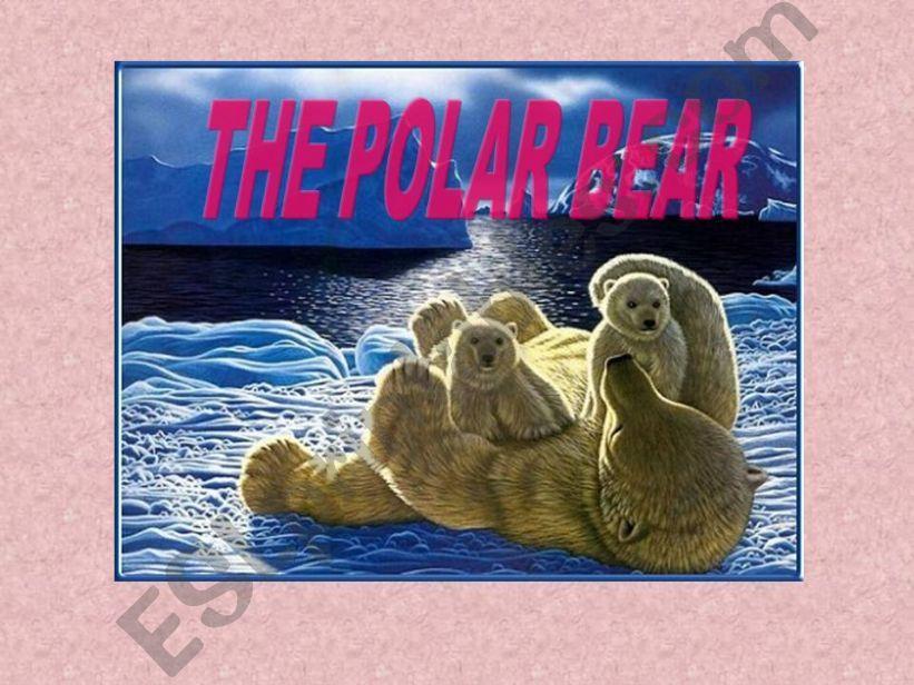 The polar bear powerpoint