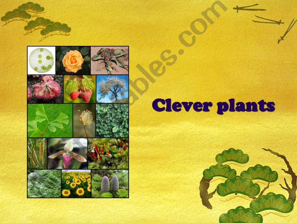 CLEVER PLANTS powerpoint