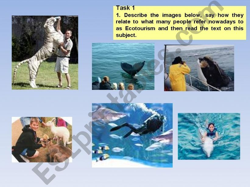 Protecting our Environment powerpoint