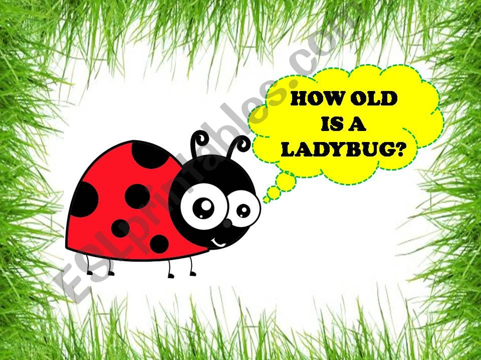 HOW OLD IS A LADYBUG? powerpoint