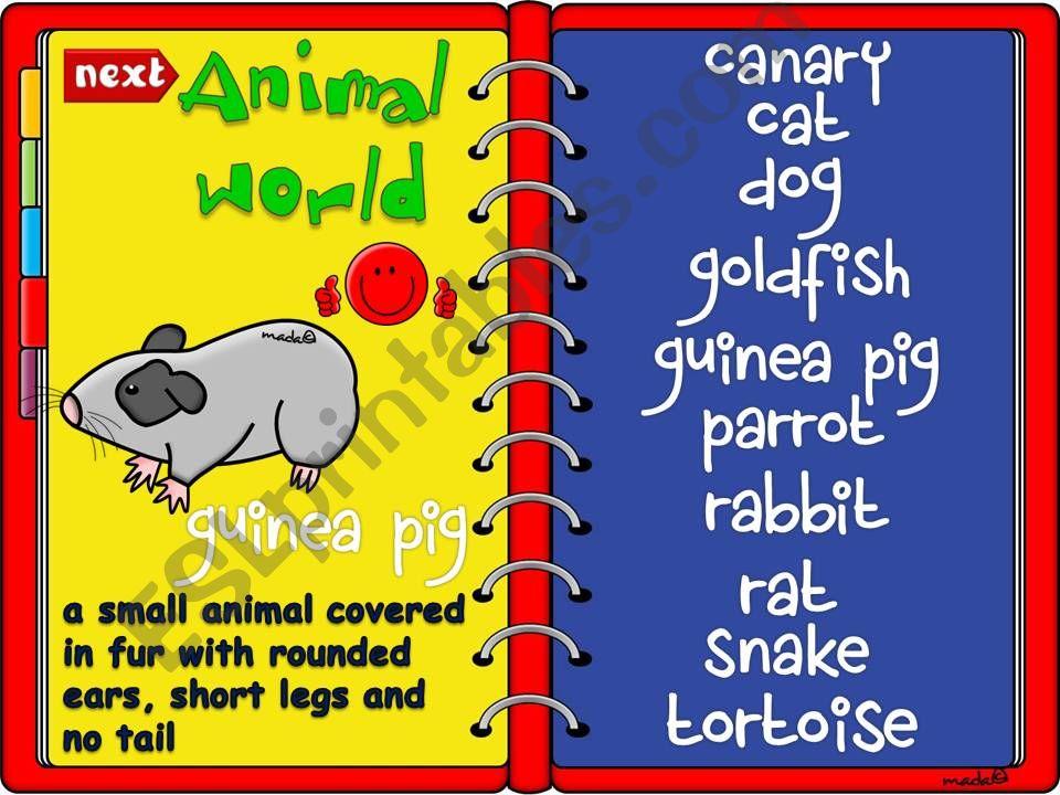 Animal worls - pets *GAME* (2)