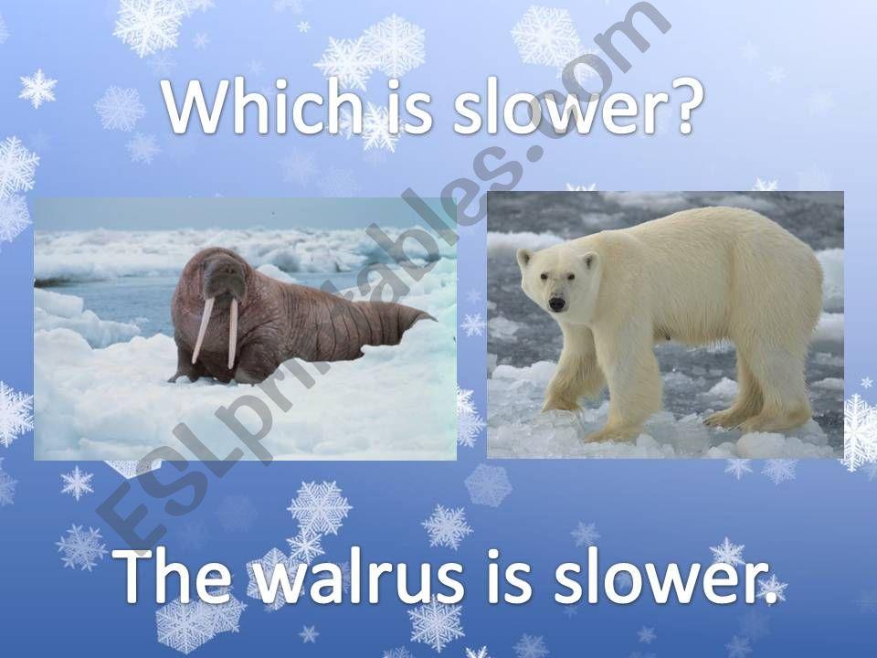 Arctic Animals Comparison 2 powerpoint