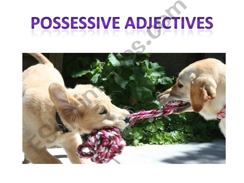 Possessive adjectives I powerpoint