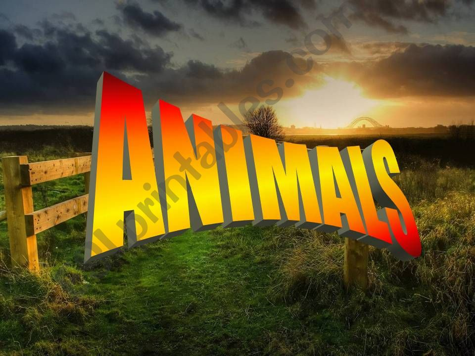 Animals Vocabulary powerpoint
