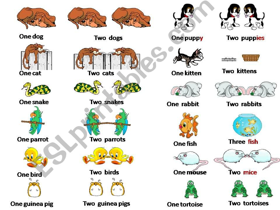 Can you name these pets? powerpoint