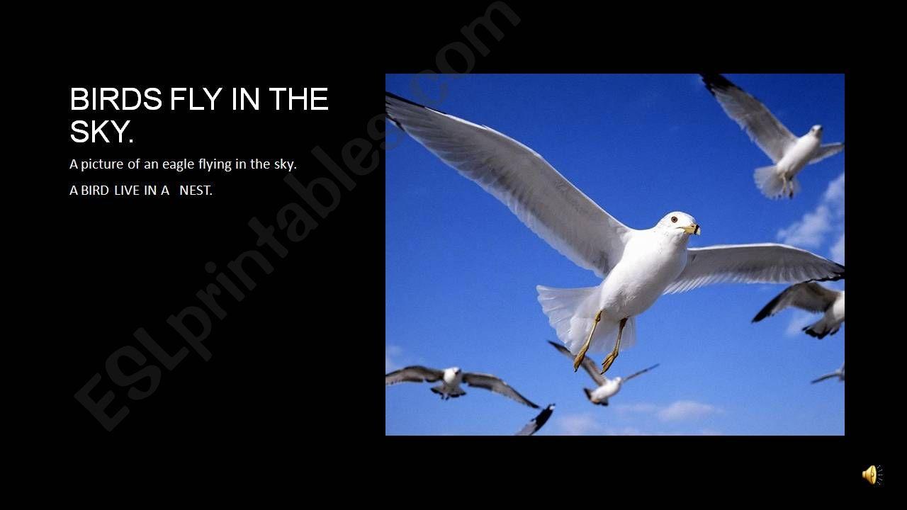 birds flying in the sky powerpoint