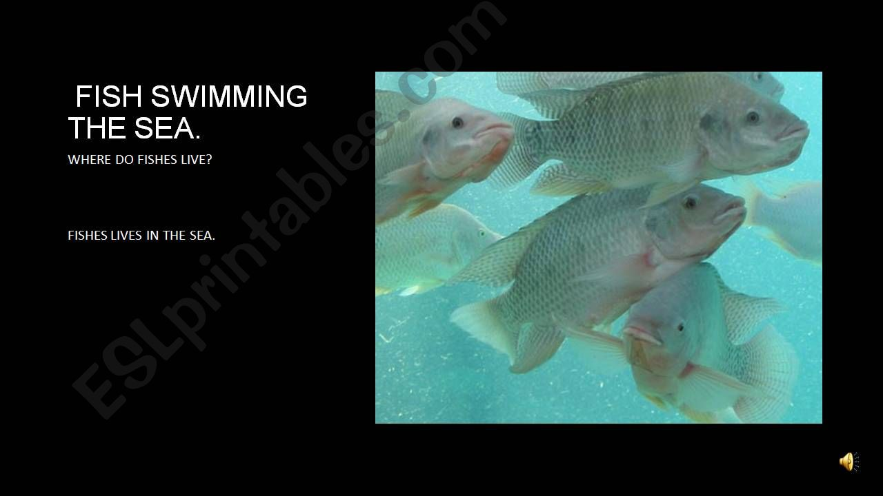 fishes swim in the sea. powerpoint