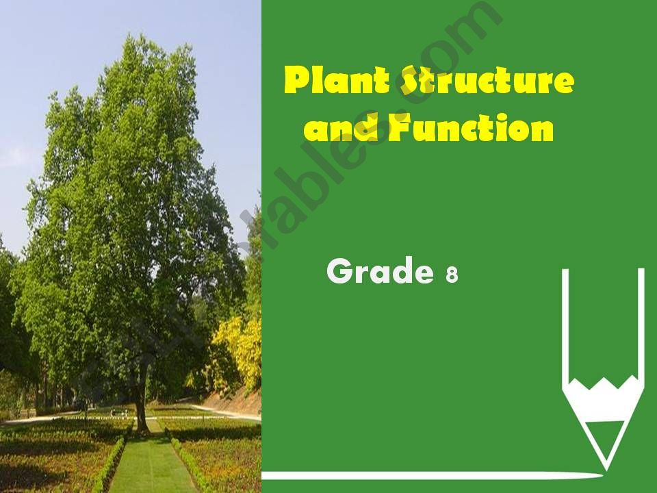 plant structure and function powerpoint