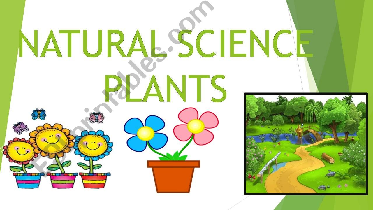 NATURAL SCIENCE - PLANTS powerpoint