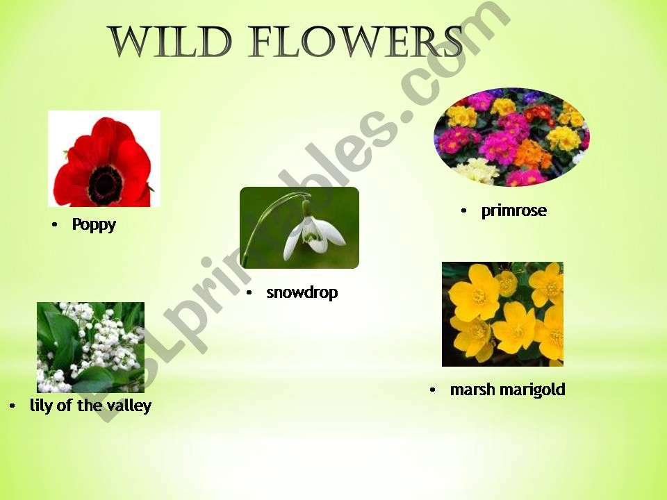 Flowers / Gardening powerpoint