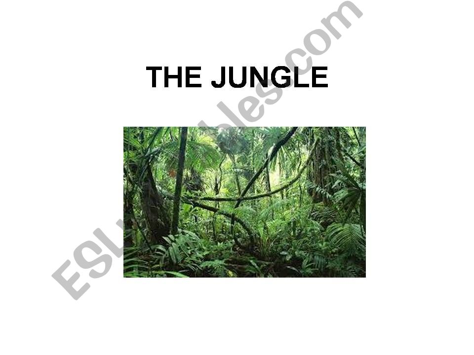THE JUNGLE powerpoint