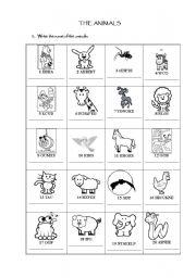 mammals wild animal best blog pet and wild animals worksheet. Black Bedroom Furniture Sets. Home Design Ideas