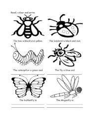 English Worksheets: Color the insects