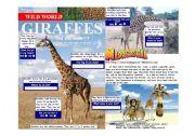 English Worksheets: Wild World - Giraffes