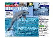 English Worksheets: Wild World - Dolphins
