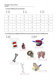 English Worksheet: The body - internal organs