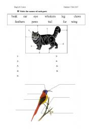 English Worksheets: Parts of animals� bodies