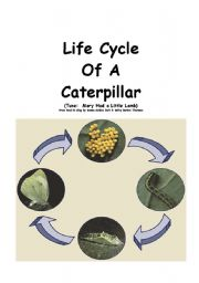 English Worksheet: Life Cycle of a Butterfly