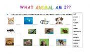 English Worksheets: what animal am I??