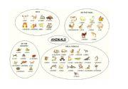 English Worksheets: animal spiderweb