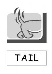 English Worksheets: Animals Body Parts