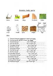 English Worksheet: animals body parts