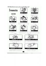 English Worksheets: Insect