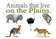 English Worksheets: ANIMAL THAT LIVE ON THE PLAINS