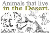 English Worksheets: ANIMALS YHAT LIVE IN THE DESERT