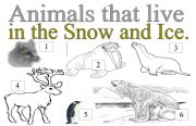 English Worksheets: ANIMALS THAT LIVE IN THE SNOW AND ICE