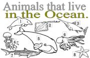 English Worksheets: ANIMALS THAT LIVE IN THE OCEAN
