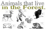 English Worksheets: ANIMALS THAT LIVE IN THE FOREST