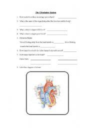 English Worksheet: Circulatory System