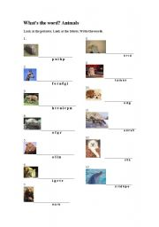 English Worksheets: What�s the word? Animals
