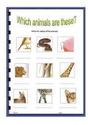 English worksheet: what animals are these?