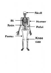 English Worksheet: bones