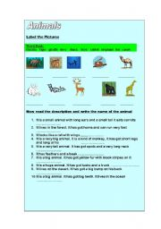 English Worksheets: Animals Descriptions